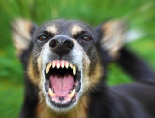 Sentència d'Indemnització per mossegada de gos